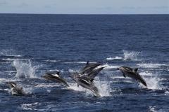 Fauna-Marinha