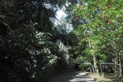 Mata-Jardim-03