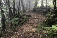 Trilho-Ribeira-do-Faial-da-Terra-05